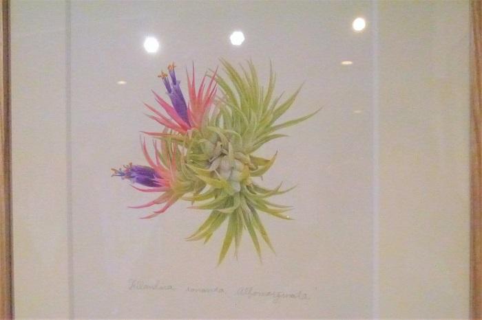 アリ植物のSTRINGEPLANTSさんのブース内に飾ってあったのは、mog2さんのボタニカルアート。優しい色彩の絵が並びます。