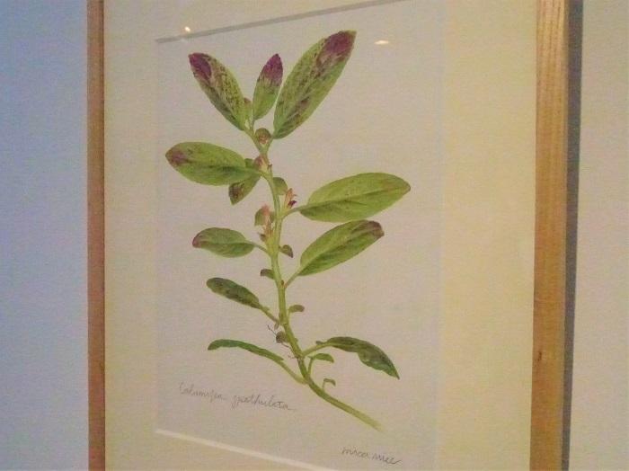 よく見ると、絵のモデルとなった植物がSTRINGEPLANTSさんのブースに並んでいたり、と楽しい発見もありました。