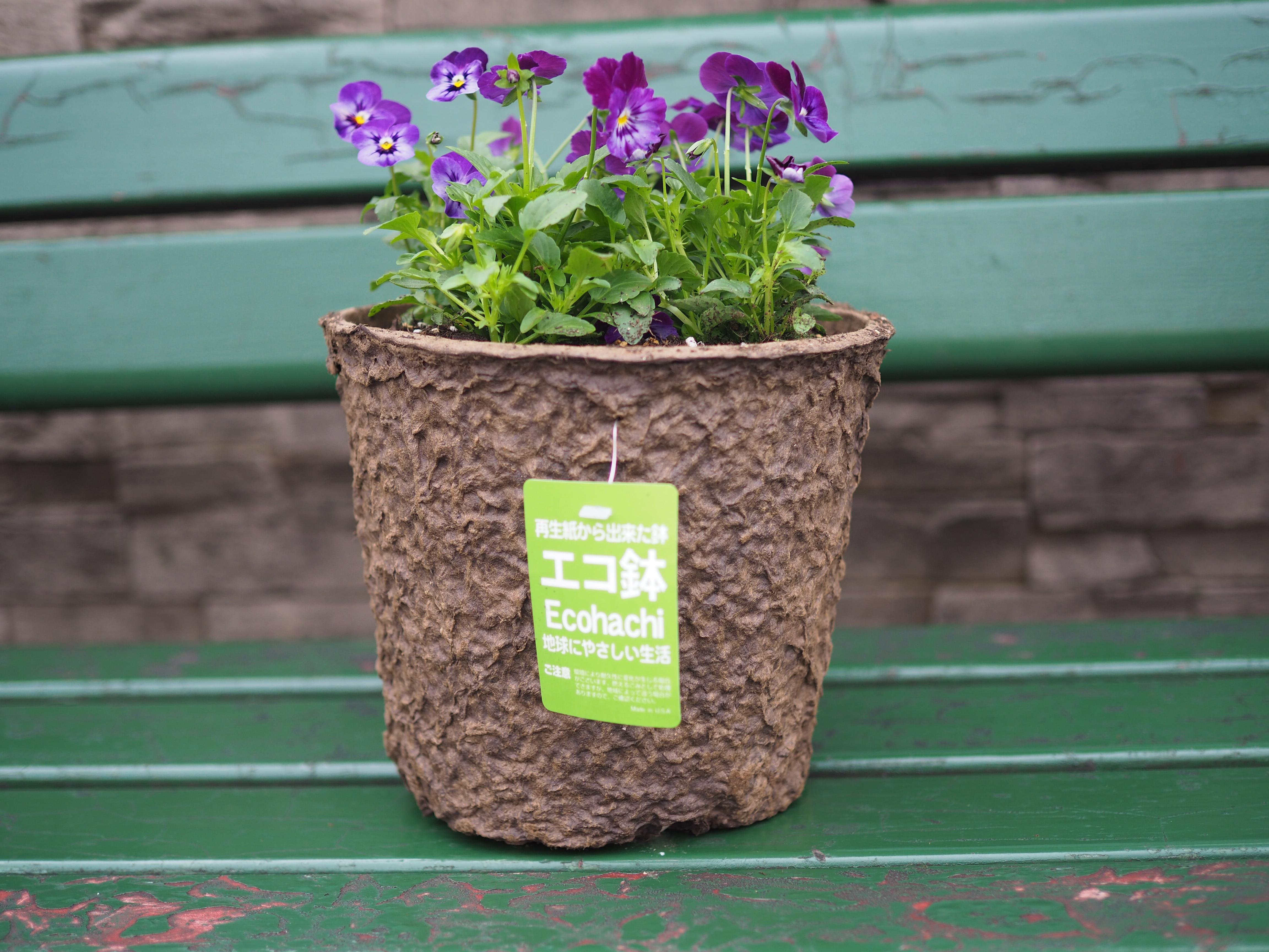 参加者には1人につき5ポットの苗が配られ、そのうちの4ポットを使って寄せ植えを作ります。残りの1ポットはお土産としてお持ち帰り! 植え込む鉢は再生紙からできたエコ鉢です。環境に配慮です。