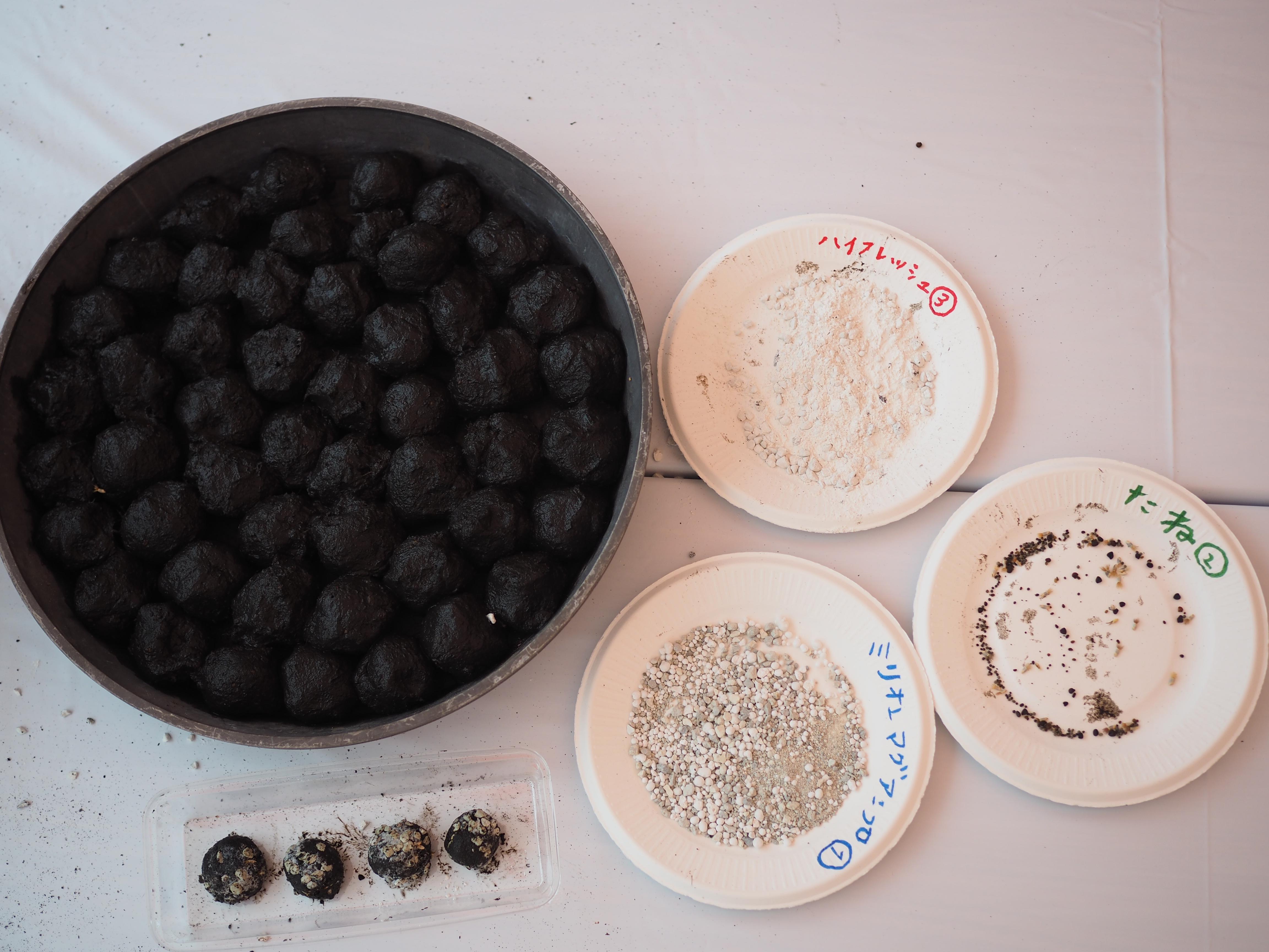 ちいさなタネを播きやすくするだけでなく、参加者同士のコミュニケーションツールとしても近年人気の「タネだんご」。  池などの湿地に堆積した植物が腐敗して分解した「けと土」に赤玉土などを混ぜた泥を丸めて、花の種や肥料、ケイ酸塩白土などをまぶしつけていきます。たねダンゴ1個の大きさはキンカンの実ぐらい。
