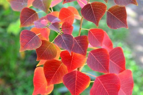 育てているハーブが上記のどれに区分するかを調べておいて、朝晩の気温が10度を切ったらそれぞれのハーブに合った管理場所に移動するなどの冬越し対策を始めます。  温度で管理する方法以外としては、紅葉が始まる時期は朝晩と昼間の寒暖差が激しくなる時期なので、紅葉を目安に作業に入ると、その年にあった時期に作業ができます。木枯らし一号が吹く前までに、だいたいの作業を終えるとよいでしょう。