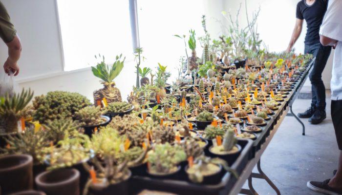 今回のBOTTA も今人気の出店者がこんなに!  Hiro's Pitcher Plants https://hiros-pitcherplants.com ISHII PLANTS NURSERY https://www.instagram.com/ishiiplantsnursery/?hl=ja Konect.Tokyo https://konect.tokyo mana's green http://manasgreen.net moku http://moku2017.com/ necomoss https://www.instagram.com/necomoss/?hl=ja Saori Ohwada http://www.saoriohwada.com/saito/Home.html SHOETREE https://www.instagram.com/shoetree_2016/?hl=ja SmokeyWood http://www.baobabu.net STRINGEPLANTS & mog2 https://www.instagram.com/itome_sp_/?hl=ja STUDIO.ZOK http://studio-zok.com/ 10⁻²⁴ Plants https://www.instagram.com/machi_yocto/?hl=ja
