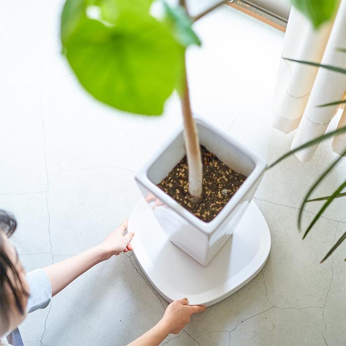 観葉植物 水やり プランタブル