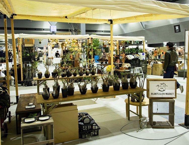 塊根植物を中心に希少植物を扱う愛知県のショップPLANTS GROW MARKET.さんは、パキポディウム一択にしぼって出店!ぷっくりむっちりのグラキリスがずらりと並びました。