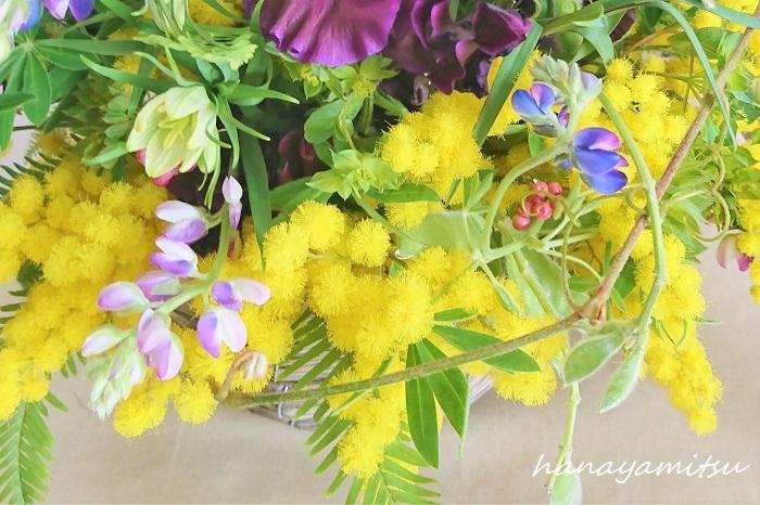 ミモザの水上げのコツ ミモザの花は本当に可愛らしく、いつまでも見ていたくなります。そんな可愛いミモザを花瓶に生けて自宅で楽しむコツについてご紹介します。  切り花のミモザは水落ちしやすいので、水の吸い上げをよくする作業を行いましょう。ミモザの枝を大きく斜めにカットし、茎の中のワタを取ります。さらに水に浸かる分くらいの枝の表皮を剥ぐようにしてください。これはナイフで行えば簡単です。植物は道管だけでなくその表面からも水を吸収するので、このひと手間でぐっと水の吸い上げがよくなります。  水の吸い上げがよくなったミモザはたっぷりの水を入れた花瓶に生けて楽しんでください。  ミモザをドライフラワーで楽しむ ミモザは水落ちしやすいとお話ししましたが、その特性を活かしてドライフラワーにするのも素敵な楽しみ方です。水上げが悪い植物はドライフラワーになりやすいものが多いという特性があります。  ふわふわのミモザの花を風通しがよく直射日光の当たらない場所に吊るして乾かしましょう。あっという間にきれいなドライフラワーの出来上がりです。  注意点は、乾燥すると葉が落ちやすくなること。パラパラと落ちる葉は掃除の難所になりかねません。ドライフラワーにする前にある程度葉っぱを落としておくと、見た目にもきれいです。