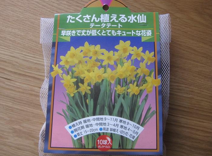 スイセンは早春に花を咲かせる春を告げる球根植物のひとつです。日なたと水はけのよい用土を好みます。球根の植え付け適期は10~12月。花の色は白や黄色、オレンジ色などがあります。草丈は15~40㎝くらいです。今回は草丈が低めの黄色いスイセンを11月の初め頃に植えました。