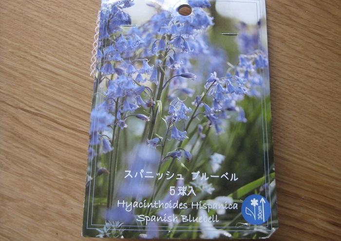 スパニッシュブルーベル(シラー)は4~5月頃につり鐘状(ベル型)の花を咲かせる人気の球根です。花の色は青紫、白、ピンクの3色があります。草丈は20~30㎝くらいです。日なたから半日陰、水はけのよい用土を好みます。球根の植え付け適期は10~11月くらいです。11月初めに白のムスカリとスパニッシュブルーベルを一緒の鉢に植えました。