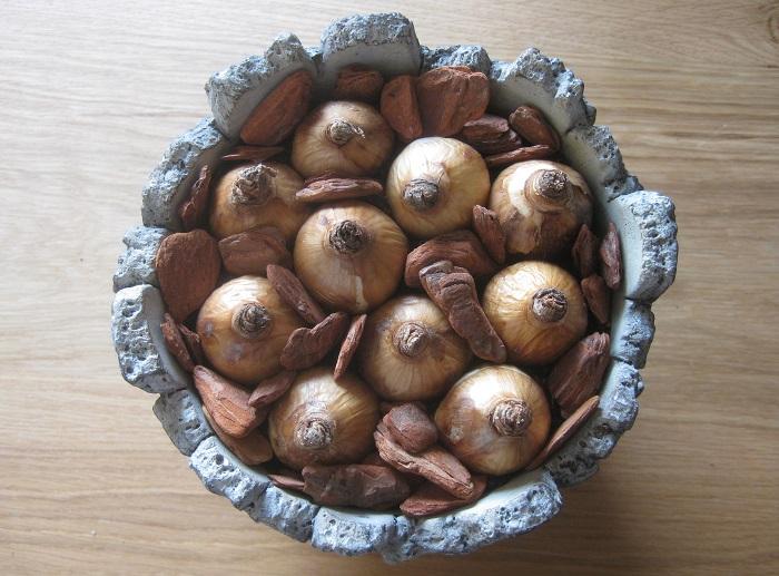 球根の隙間に培養土を足して完成です。さらにウッドチップを置くとオシャレに飾れます。