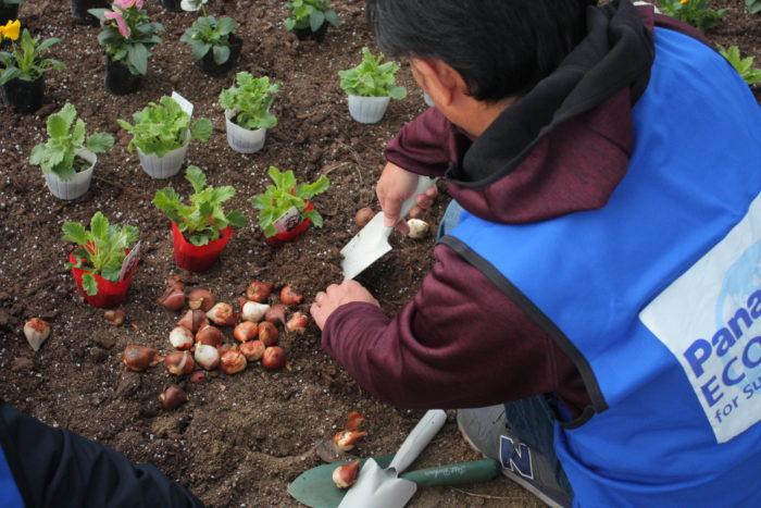 今回植えた花はパンジー、ビオラ、プリムラ、アリッサム、チューリップの球根です。冬の寒い時期でも花を咲かせてくれる花苗です。チューリップの球根は、春になると色とりどりの花を咲かせます。苗が置かれている場所に穴を掘り、植え付けていきます。