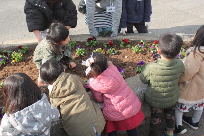 地域の保育園の園児たちもお手伝いに駆けつけてくれました。先生の指導のもと、一生懸命花苗を植えています。