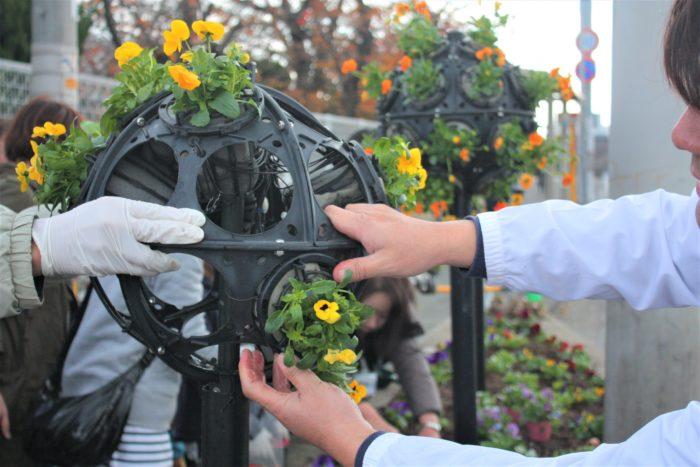 容器のまま、穴の中にカチッと音がするまではめ込めば苗は落ちません。スポンジ部分の保水力がとても高いので、土の中に植えこまなくても、根は育ちます。花や葉が茂り、綺麗なボール状の植え込みになるように願いを込めます。  こうしてたくさんの方の協力があり、パナソニック前の2カ所の花壇は綺麗な花で整備されました。実際の作業時間はなんと約40分、環境演出家協会の事前の準備やサポートで、みんなスムーズに植え付けが終わりました。