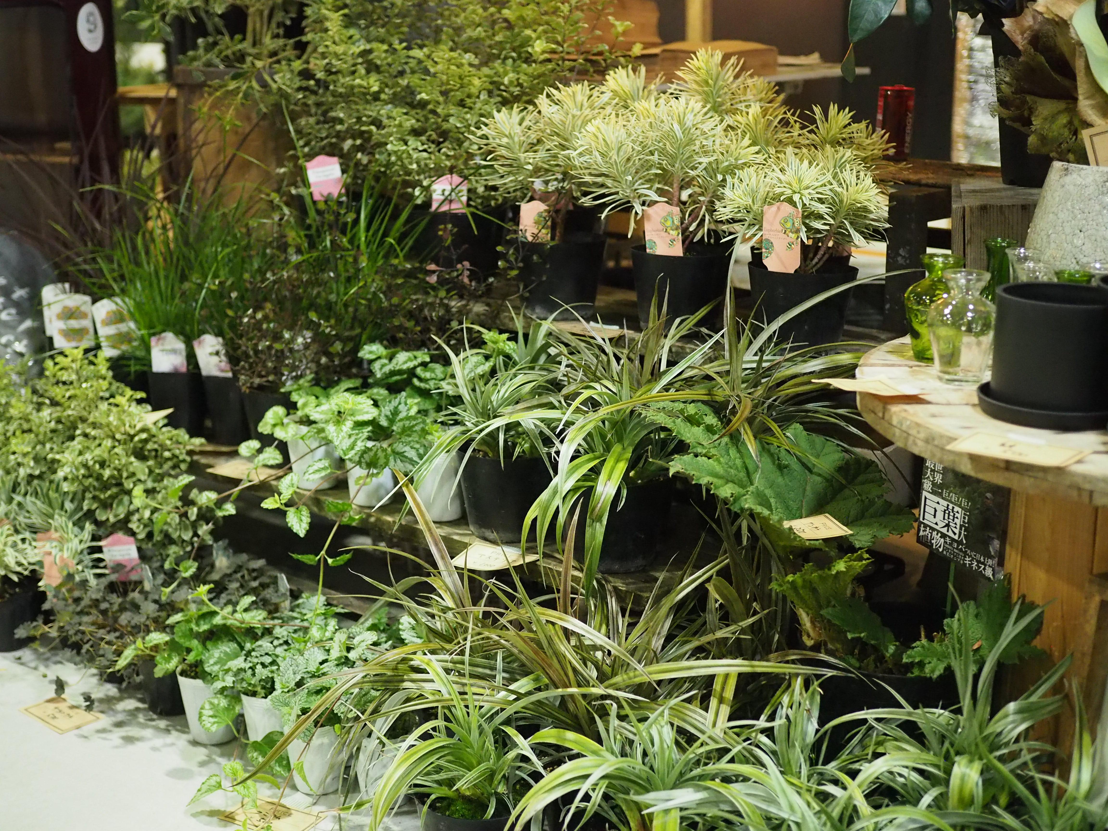 nine plants(麻野間園芸)さんのブースは、ひとことでいうと多種多様。庭に欠かせない下草類を中心に今の暮らしにあった植物を柔軟にセレクトして生産されています。年に数回あるFIELDSTYLEでも、季節に応じて毎回持ってくる植物が違うので、「次はどんな植物に出会えるかな?」と楽しみなブースでもあります。