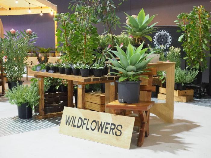 オーストラリア原産の植物を生産するWILD FLOWERS DEPT(渡会園芸)さん。  今回は過去最高の量の植物をそろえて気合が入っていました! オージープランツ以外に、アガベなどの植物もそろえて準備万端。