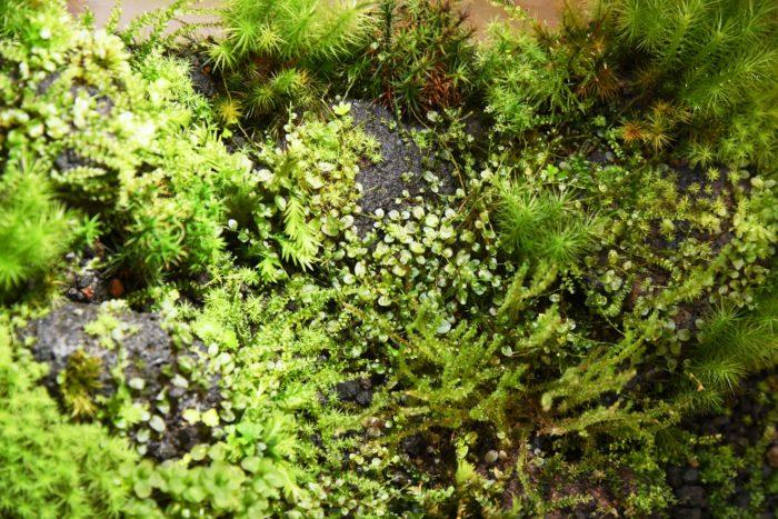 苔と一口に言っても、明るい敷石の隙間に生えているものやうっそうとした林の樹木の木肌に映えているものなど様々です。