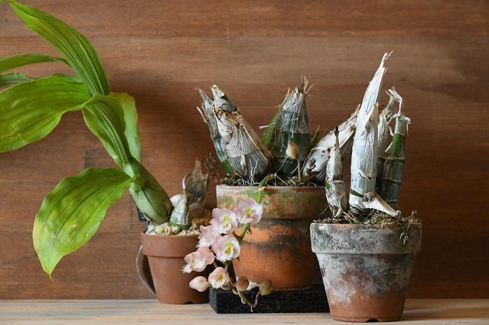 バラは弱くて育てにくいという定説がありましたが、それも今は昔の話。現在では日本での品種改良が進み、高温多湿に耐えて病気に強く咲き続ける品種も増えています。