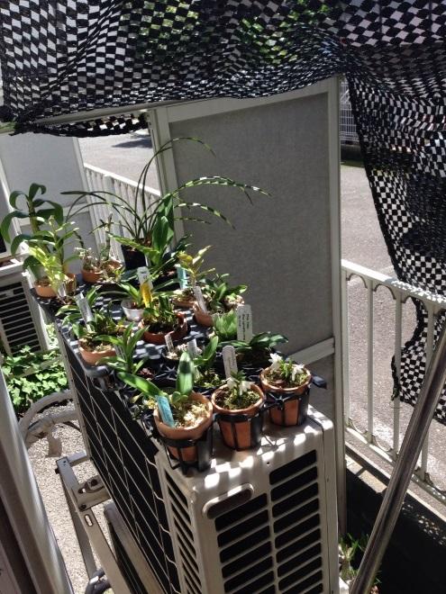 清水氏の自宅での小型ラン栽培スペース