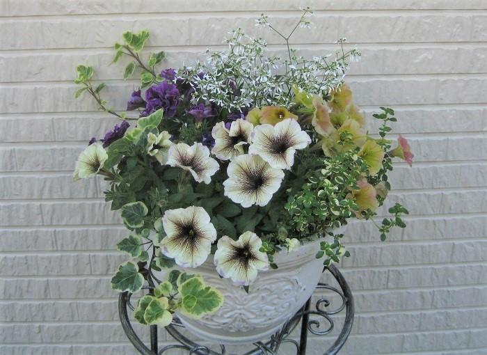 日当たりと風通しの良い場所に置いて、1日1回お水をあげます。枯れた花がらを取って、1か月後から水やりをかねて液肥をあげると長く楽しめます。  お気に入りの寄せ植えを玄関やお庭、ベランダに置くと、周りの雰囲気がぐっと素敵に変わります。1ポット1ポットこだわって選んだ苗を使って好みの寄せ植えを作って、大切に育ててみてくださいね。