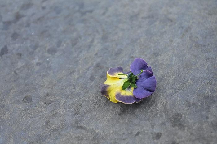 取り出すときは花の後ろの茎の部分から取り出すと花びらが崩れにくいのでおすすめです。