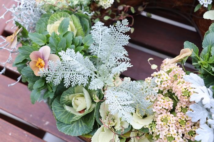 ちりばめられたシルバーリーフがそれぞれ美しく、その他の草花と引き立て合っています。