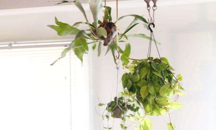 通販サイトには、忙しい人でも「植物のある暮らし」を実現できる魅力が詰まっています。他にも、様々な種類の植物に出会えるチャンスも。通販サイトで観葉植物を購入する人が増えている、その理由をご紹介!