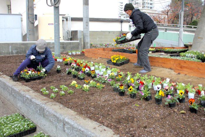 植えつけを行う花壇には、あらかじめ環境演出家協会の方により花苗が配置されていました。花壇は初心者でも簡単に植え付けができるように、土壌改良を行い、土を柔らかくしたそうです。