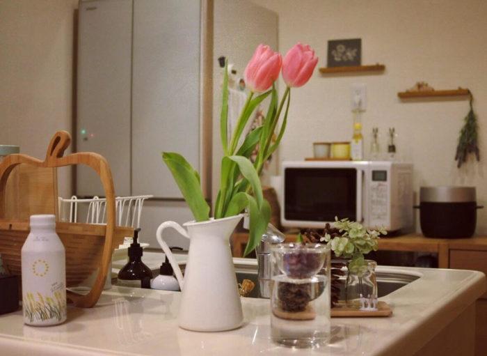 チューリップをピッチャーに生けて。ヒヤシンスの水栽培も可愛らしい芽が出ていますね。
