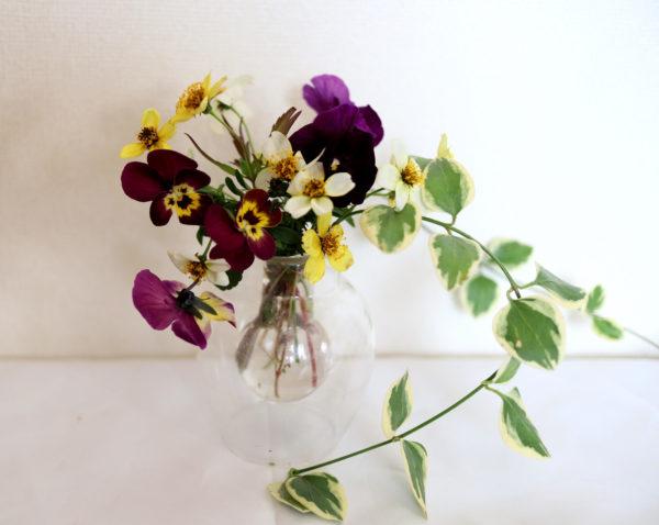 庭のお花を生けて。紫と黄色の配色が素敵です。動きのあるツルニチニチソウの葉がアクセント。