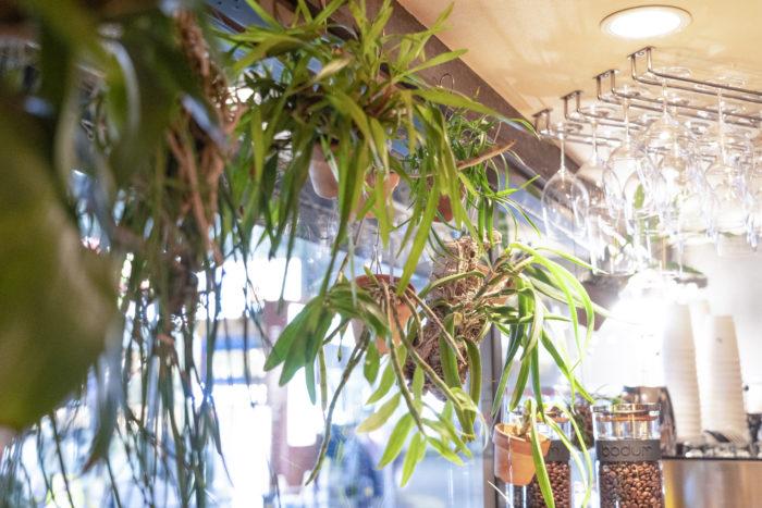 ガラス窓に並ぶ原種のランたち。「植物の数はこれでも減らしたくらい。多いときで60鉢は置いていたかな」というオーナーの原田さんは、無類のデンドロビウム好き。植物好きのお客さんともランの話で盛り上がることがあるそうです。