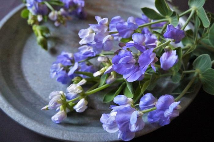 植物名:スイートピー 科名:マメ科 分類:一年草、多年草 花期:4~6月 春を代表する花の一つ、スイートピー。スイートピーにも紫色の花を咲かせる品種があります。ラベンダーのような青味がかった紫色から夜を思わせるような暗く濃い紫色まで。紫色のスイートピーにもたくさんの種類があります。薄紫色の花を咲かせる宿根スイートピーも人気があります。  スイートピーは、すっとした1本の茎に縦に連なるように香りの良い花を咲かせます。スイートピーだけを両手いっぱいに抱え込みたくなるような、花の中に顔をうずめたくなるような、そんな幸せな気持ちにしてくれる花です。