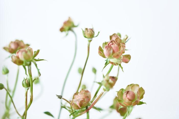 「スプレー咲きのバラは、少ない本数で飾っても空間をおしゃれに演出してくれますよ。」