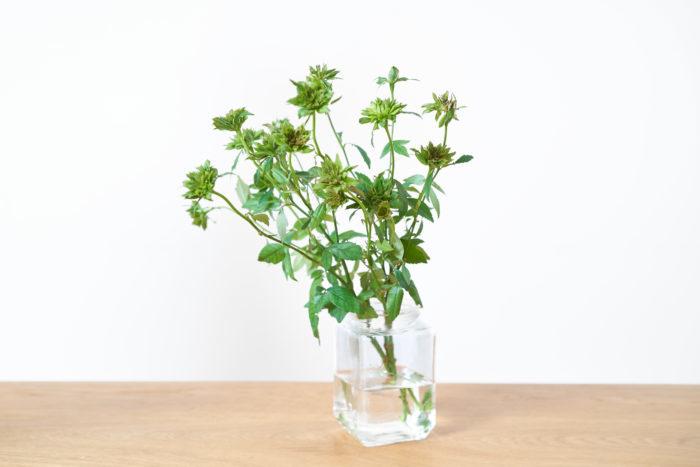 グリーン1色だからいろんな花と合わせやすいグリーンローズ。野性味のある花姿で、ファンの多い品種です。  日本では作っている生産者さんも少ない、とても珍しいバラなんです。