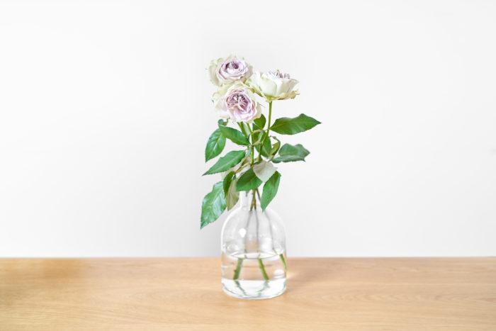 薄紫色とほのかな緑色で優しい風合いのラピスベール。  ふっくらとした花姿は、見る者に幸福感を与えてくれます。