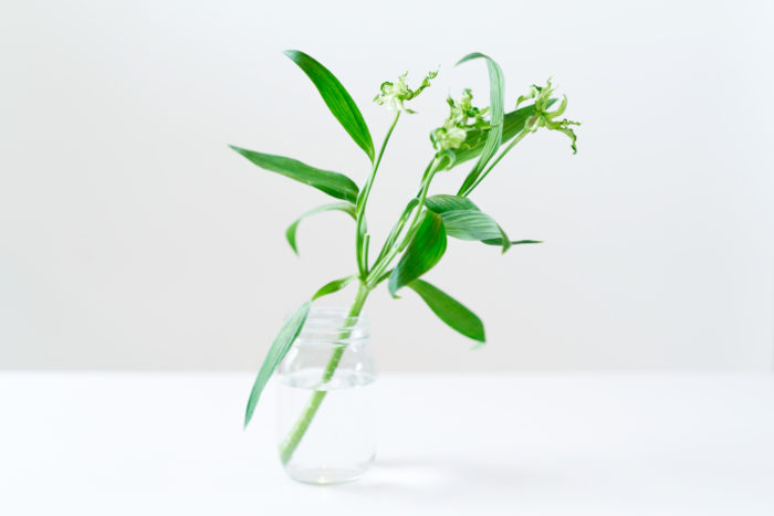 くるくるとした花姿がとってもオシャレなアルストロメリア。こちらはグリーンモジャという珍しい品種です。