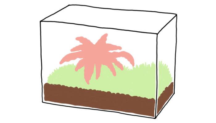 植木鉢の代わりに水槽を使い、空間を強調。普通の寄せ植えも、広大な景色の一部のように見えてきます。
