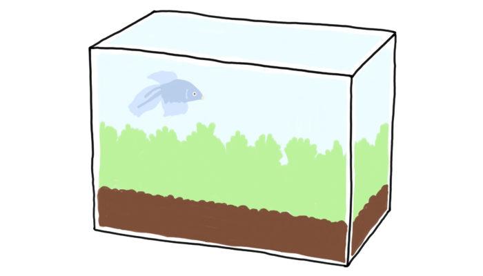 小さな水槽に一般的な種類の水草や魚を入れるだけでも、美しい水景を生み出すことができます。