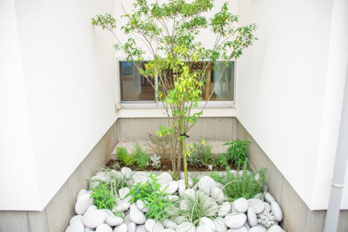 ダイニングから見える、住まいの裏側にある坪庭のような空間。高木のハイノキとローズマリーなどのハーブ類を植え、足元には存在感のある白いゴロタ石を据えている。