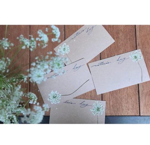 繊細な線が魅力の押し花。メッセージカードにつけてオリジナルのカードにしたり、しおりを作ったり。ガラスのフレームに挟んで標本風にしても楽しめますよ。  庭で育てている花で押し花を作るのもいいですね。
