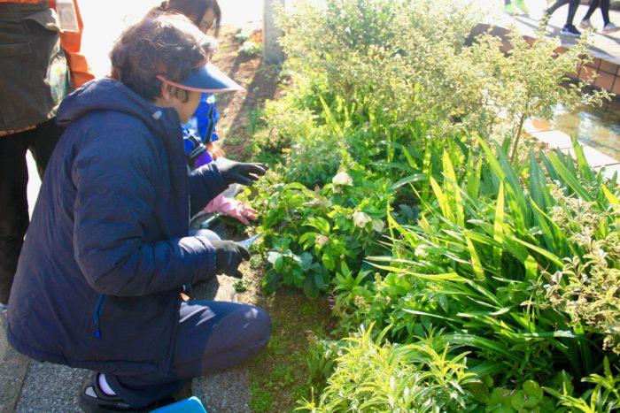 福岡市内では、花栗さんや「大濠公園ガーデニングクラブ」のメンバーのように、公園や歩道など公共空間に花壇を作る活動が広がっています。活動の参加者は、植物のお手入れを楽しんで行なっていたり、花づくりを通して人と人とのふれあいの輪が広がっています。ボランティア花壇に参加している方々の声や参加方法についてお伝えします。