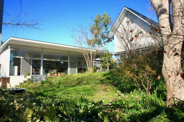 入口のアプローチを通ると事務所とカフェ、母屋の3つの建物に囲まれた庭が広がります。なだらかな傾斜のある庭の上には株立ちのサルスベリやヤマザクラなど、様々な樹木と、足元にはシダやクリスマスローズ、カタバミなどが地表を覆います。球根も植えているので、毎年芽を伸ばし、花を咲かせます。ガラス張りの建物がアトリエで、庇(ひさし)の出幅や位置を考えて作っているため、季節によって変わる影の長さによって、冬は寒すぎず、夏は暑すぎずという様に調整をしてくれるんです。