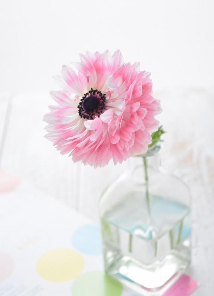 もったいないので折れた花を切って花瓶に生けてみました。