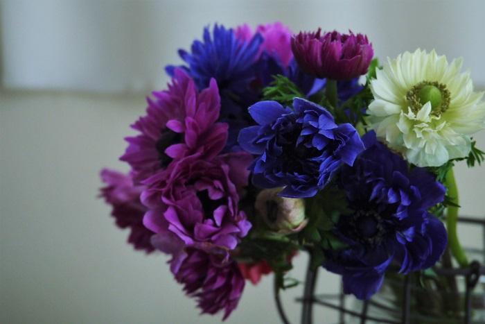 アネモネは蝋細工のような透明感のある花びらと、多数の雄しべが並ぶ花芯が独特な魅力を持つ花です。アネモネの花の色には何種類あるのでしょうか。アネモネの花の色を紹介します。  アネモネの花色 白 ピンク 紫 赤 グリーン 複色 ビビッドカラーから、ふんわりとしたパステルカラーまで。同じ色でも少しずつニュアンスが違います。  紫色のアネモネはベルベットのような花芯と深い紫が相まって、とてもミステリアスな印象を受けます。白いアネモネは花びらに触れることをためらってしまうくらい清楚で可憐な花です。花の色が変わると印象まで変わるのだから不思議です。  独特なフォルムと豊富な花の色。アネモネの花にはいつまででも眺めていたくなるような不思議な魅力があります。