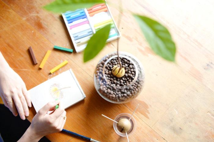 一緒におうちに居る植物の成長を観察するのも楽しいものです。日々変化する過程をイラストや文字で記録して、成長日記をつけてみませんか。