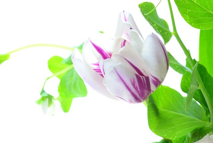 花に触れる時間は無心になれる大切な時間。春の花でお気に入りの空間を作ってみませんか。