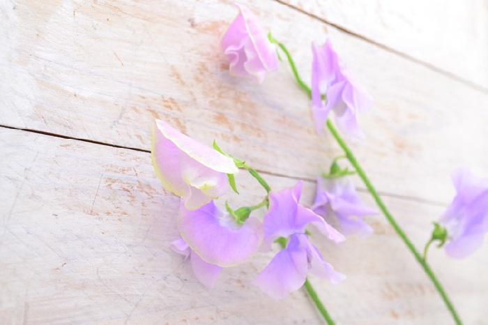 スイートピーは、春の花束やアレンジメントによく使われる、ほんのりと甘い香りがするマメ科の花。春の花屋さんに立ち寄ると独特な香りがするのは、このスイートピーとヒヤシンスの香りかもしれません。