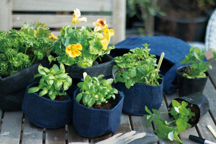 自宅の植物にピッタリのサイズを選ぶことはもちろん、育つことを見込んでゆったりサイズをチョイスしたり。まだ小さい時はふちを折って使うこともできます。