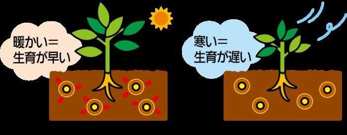 肥料効果は1年間持続します。溶け出す速さが異なる肥料の粒を程よくブレンドしているので、土にばらまいてからすぐに効きはじめ、そのまま安定して緩やかに効きめが持続します。