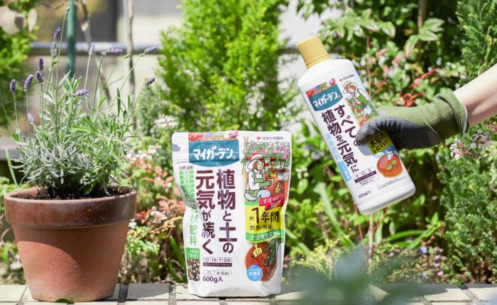 この春新登場したのは、「マイガーデン粒状肥料」と「マイガーデン液体肥料」の2商品。これまでの肥料にはなかった画期的な機能を備えており、園芸ビギナーから経験者まで、多くの人が感じる肥料の悩みをズバッと解決!園芸をより楽しく簡単なものへと変えてくれます。開発した住友化学園芸さんに、その秘密をお聞きしました。