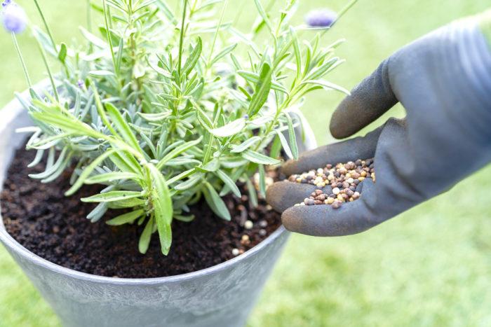 植えてからも肥料をあげたくなったら、生育途中で何度与えても大丈夫!植物に必要な量の栄養分を肥料が自分でコントロールして溶け出してくれます