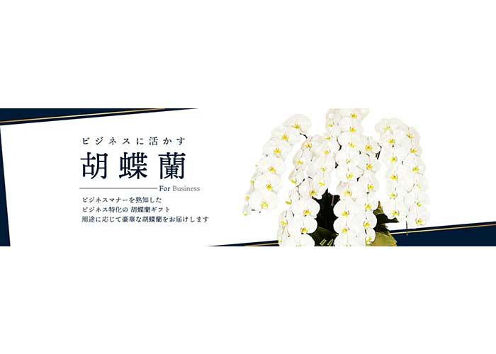 胡蝶蘭専門店ベストフラワー2