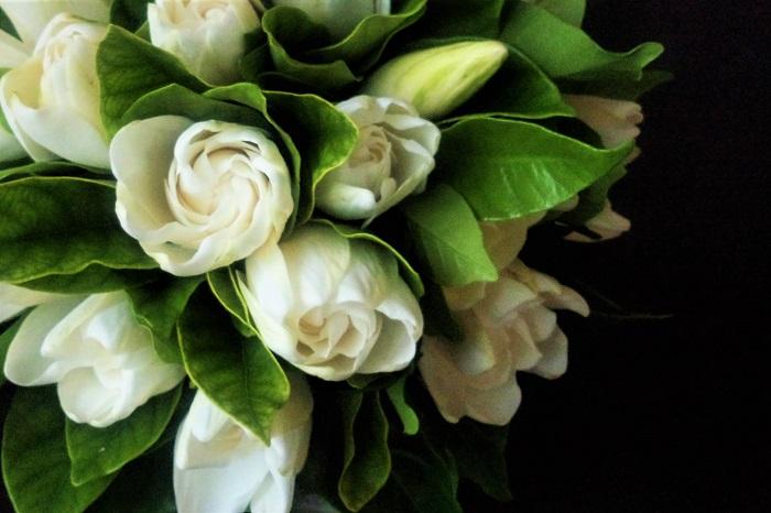 クチナシの花の咲く季節は初夏、6~7月です。そろそろ夏の気配を感じ始めた頃にクチナシの花は辺りいっぱいにその香りを漂わせます。  クチナシの花は咲き始めは真白、咲き進むに従ってクリーム色がかってきます。最後はカスタードクリームのような色になって萎れていきます。  クチナシの花びらはキズが付きやすく、さらに花は非常に短命なので切り花には向いていません。  それでも初夏のウェディングでクチナシのブーケを持ちたいという花嫁さんが後を絶たないのは、クチナシの花の儚さと香りの魅力ではないでしょうか。